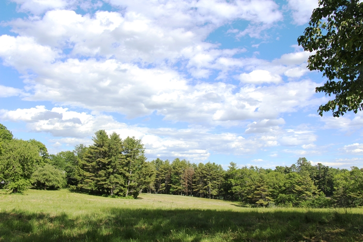 Maine meadow walk