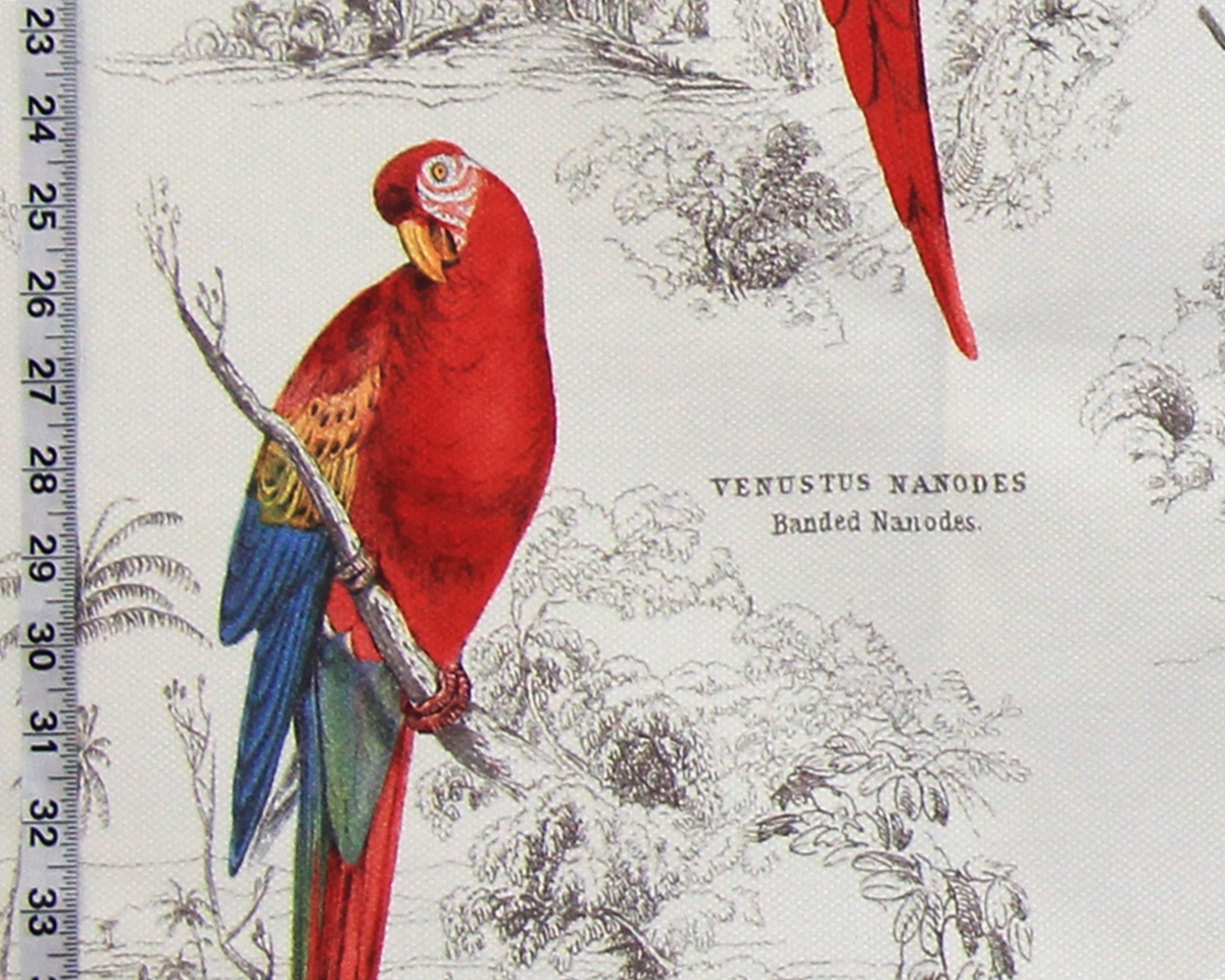 PARROT TOILE FABRIC REMNANT