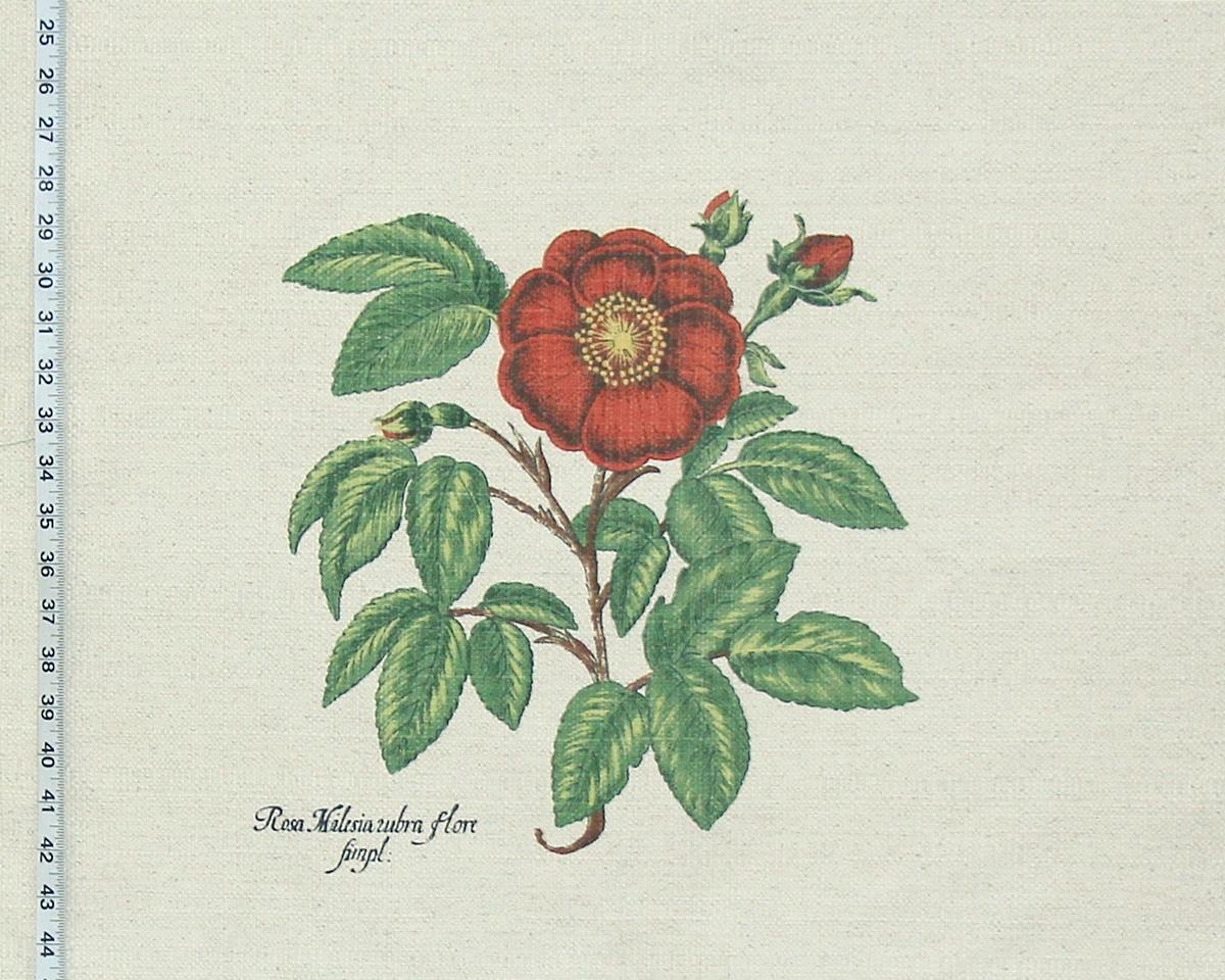 BOTANICAL ROSE FABRIC